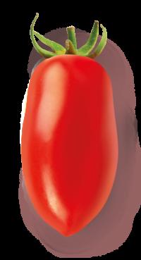 pomodoro_lungo
